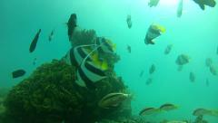 School of curious fishes Stock Footage