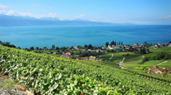 Lavaux Vineyard Stock Footage
