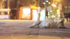 Dog sleep on street Stock Footage