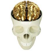 Golden brains Stock Illustration