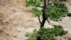 Lone tree swollen flooded river, USA - stock footage