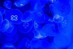 Jellyfish in aquarium - stock photo
