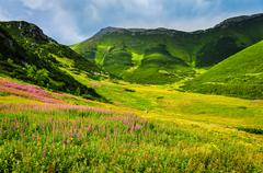 High tatras mountain green meadow with wild flowers Stock Photos