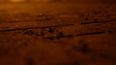 Ants walking on pavement at night Stock Footage
