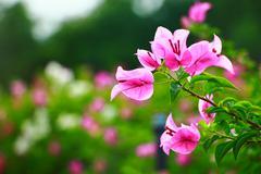 peper flower - stock photo