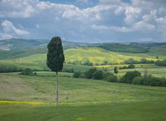 Solitary cypress tree in tuscan landscape under a dramatic sky Stock Photos