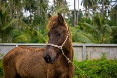 Dwarf horse in garden Stock Photos