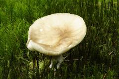 mushroom group - stock photo