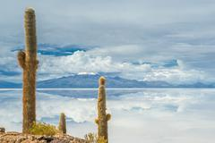 cardon cactus at isla de pescado, bolivia - stock photo