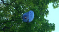 Paper lantern on a tree HD Footage