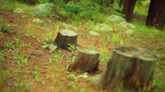 Tree stump logging 1 Stock Footage