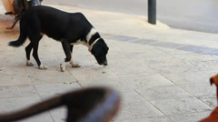 Dog in city Stock Footage