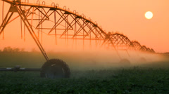Crop Irrigation at Sunset - Agriculture Sprinklers Stock Footage