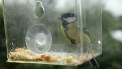 Birds on birdfeeder Stock Footage