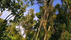 Green jungle rain forest, tropical plants panoramic view Stock Footage
