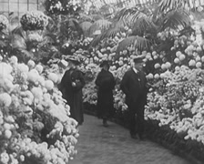 1916 - Chicago Chrysanthemum Show - stock footage