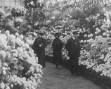 Stock Video Footage of 1916 - Chicago Chrysanthemum Show