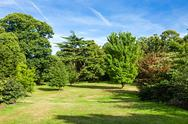 Stock Photo of lush green beautiful woodland park garden
