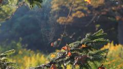 Flies and Spiderwebs in a Meadow Stock Footage