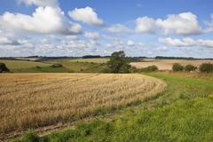 patchwork fields in late summer - stock photo