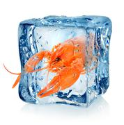 Crawfish in ice cube - stock photo
