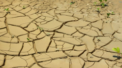 Cracked mud at the bottom of a drying pond Stock Footage