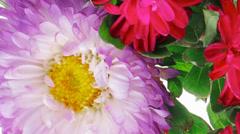 Common mallow flower (malva sylvestris) Stock Footage