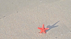 Seastar and wave.mp4 Stock Footage