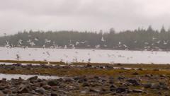 Birds Fly Near Shoreline in Alaska, Slow Motion - stock footage