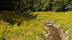 Rocky creek yellow wild flower Stock Photos