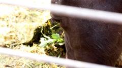 Horse Eye - stock footage