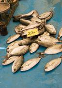 small fish for sale - stock photo