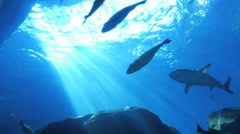 Ocean life - sharks and other fish Stock Footage