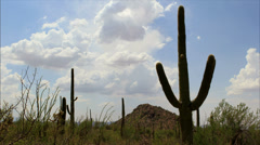 Saguaro cactus time lapse Stock Footage