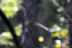 Spiderweb - stock photo