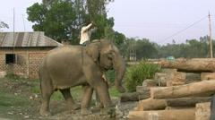Working Elephant - Bangladesh, Asia Stock Footage