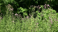 Butterflies and insects in a german forest Stock Footage