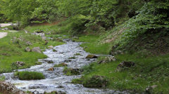 Splendid spring scenery, pure mountain river pour in green forest Stock Footage