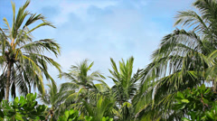 Palm grove swaying on the wind against a blue sky Stock Footage