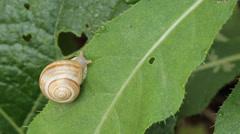 Slug Stock Footage