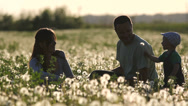 Stock Video Footage of Lovely young family blow dandelion flower in flourish field at sunset