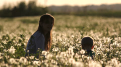 Splendid sunset over dandelion flourish field, mother and baby play in field Stock Footage