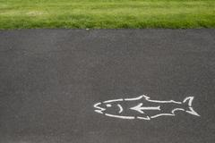 fish and arrow on pavement - stock photo