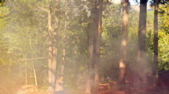 Forest fire arson arsonist Stock Footage