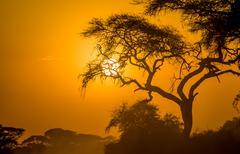 Afrikkalainen auringonlasku savannilla Kuvituskuvat