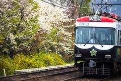 Train with beautiful sakura Stock Photos