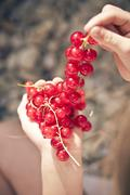 germany, bavaria, girl holding bunch of red currants - stock photo