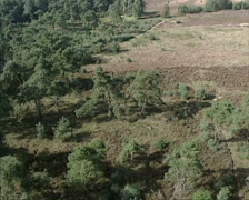 Aerial shot heathland Amerongse Berg, a moraine hill along river Rhine Stock Footage
