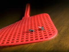 two flies - stock photo
