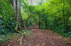 path in the jungle of panama - stock photo